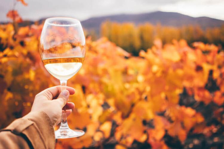 I migliori vini per l'autunno: la selezione di Viniwebstore